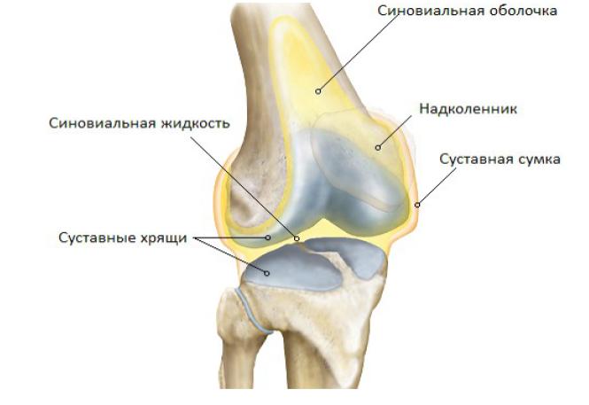 Препарат Артро-Актив для лечения суставов