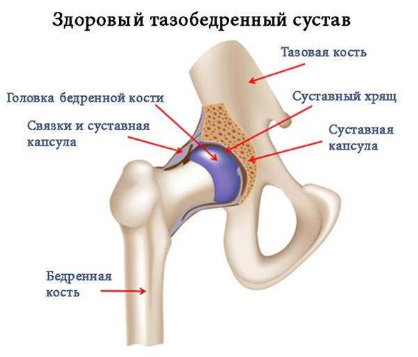 Болезни тазобедренного сустава: причины, симптомы и признаки. Лечение и диагностика болезней тазобедренного сустава у женщин в Москве