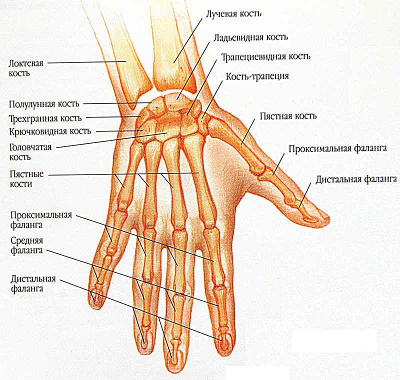 Вывих кисти руки симптомы причины лечение профилактика