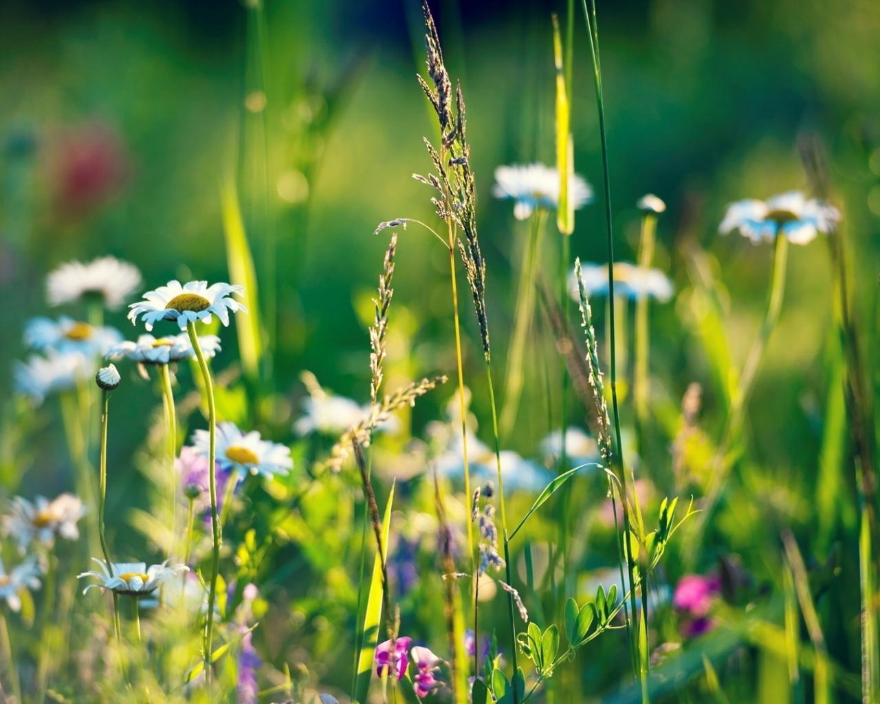 Травы для суставов и хрящей – список наиболее эффективных, побочные эффекты, показания к применению и противопоказания