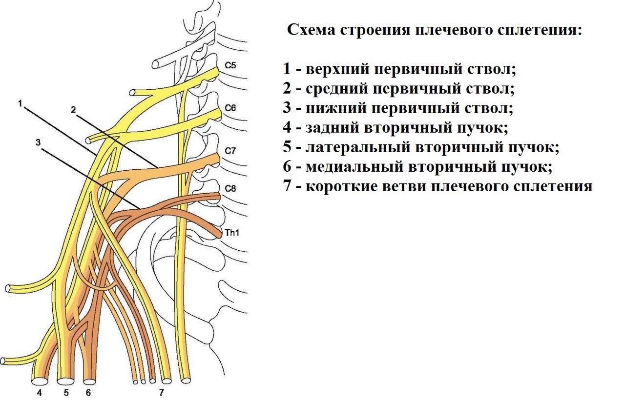 Плексит плечевого сустава – симптомы и лечение воспалительного заболевания нервного сплетения