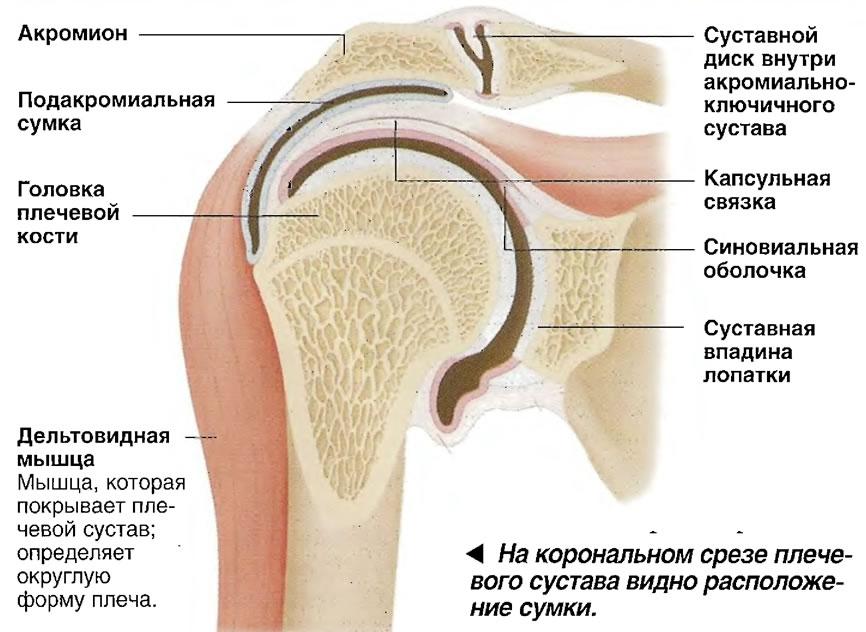 Смещение плечевого сустава симптомы - последствия, причины, рекомендации, у взрослых
