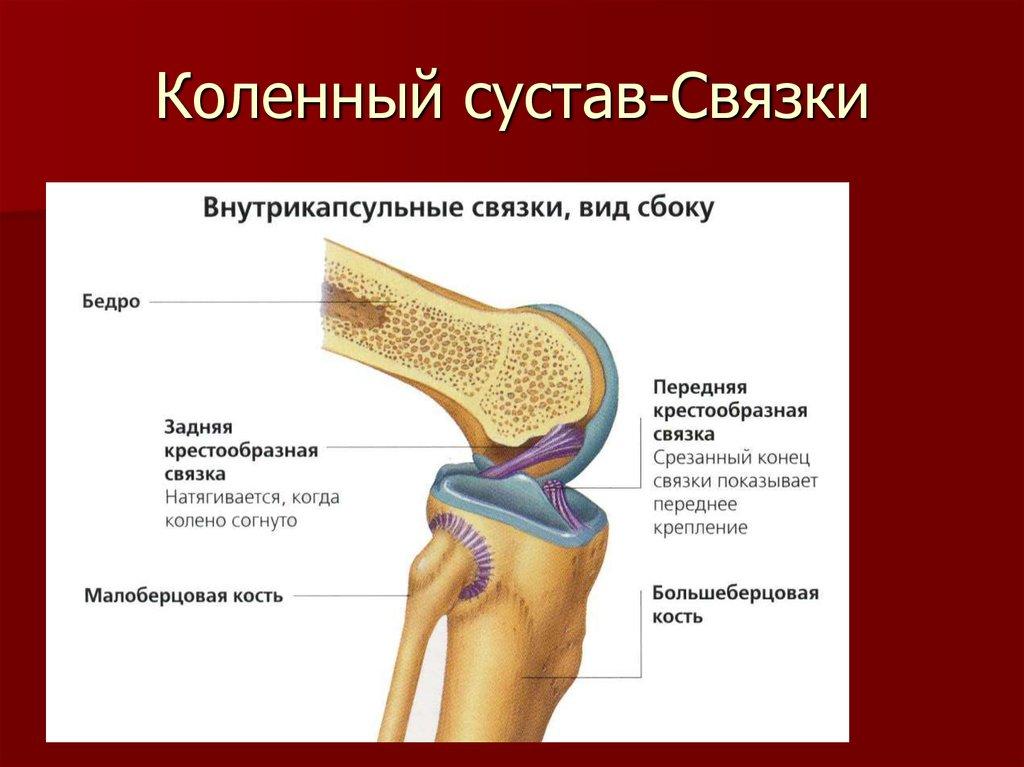 Упражнения для коленных суставов при артрозе – полезны ли физические упражнения при этой болезни?