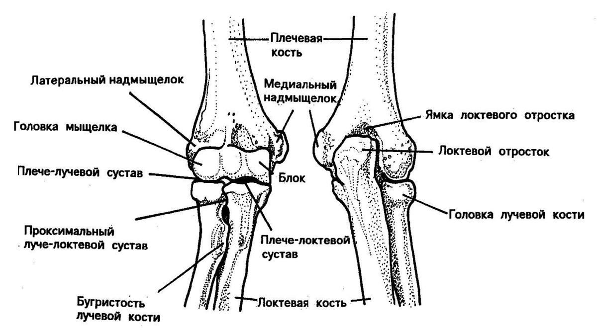 Не разгибается рука в локте до конца – причины этого патологического состояния