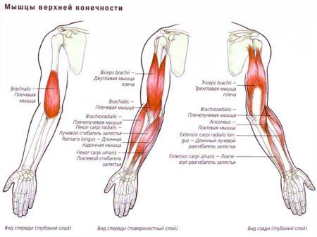 Реабилитация после вывиха плечевого сустава в домашних thumbnail