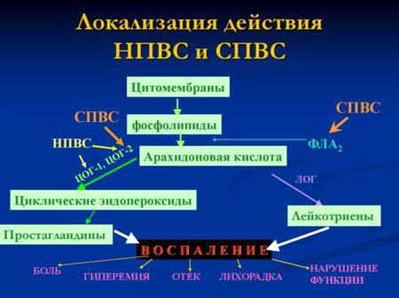 Механизм действия нестероидных противовоспалительных препаратов и СПВС